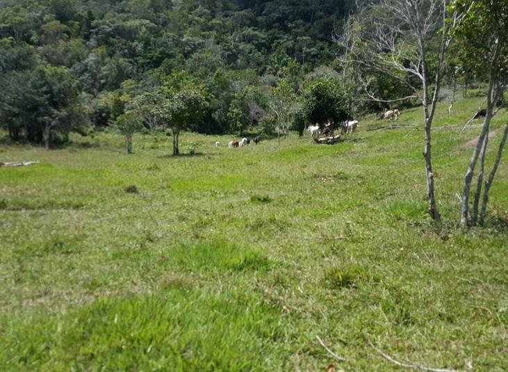 ADAB faz operação em Área de Preservação Ambiental em Santa Cruz Cabrália