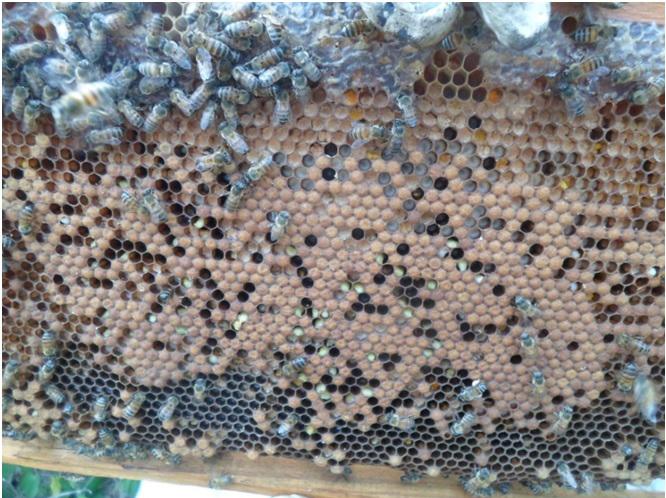 ADAB atende notificação de doenças em abelhas em Brotas de Macaúbas