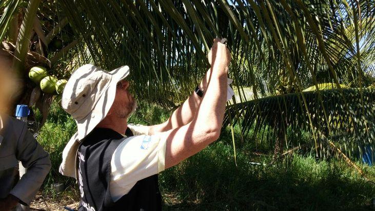 ADAB coleta material suspeito de abrigar o ácaro-vermelho-das-palmeiras, em Ibotirama e Muquém do São Francisco