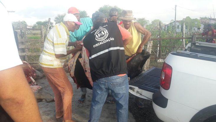 Coordenadoria Regional da ADAB em Feira de Santana combate abate clandestino de bovinos