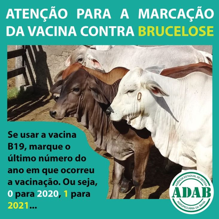 Marcação da vacina contra Brucelose